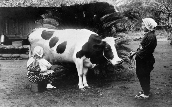 Milking at a small farm in Japan 1933_Mainichi Photo Gallery